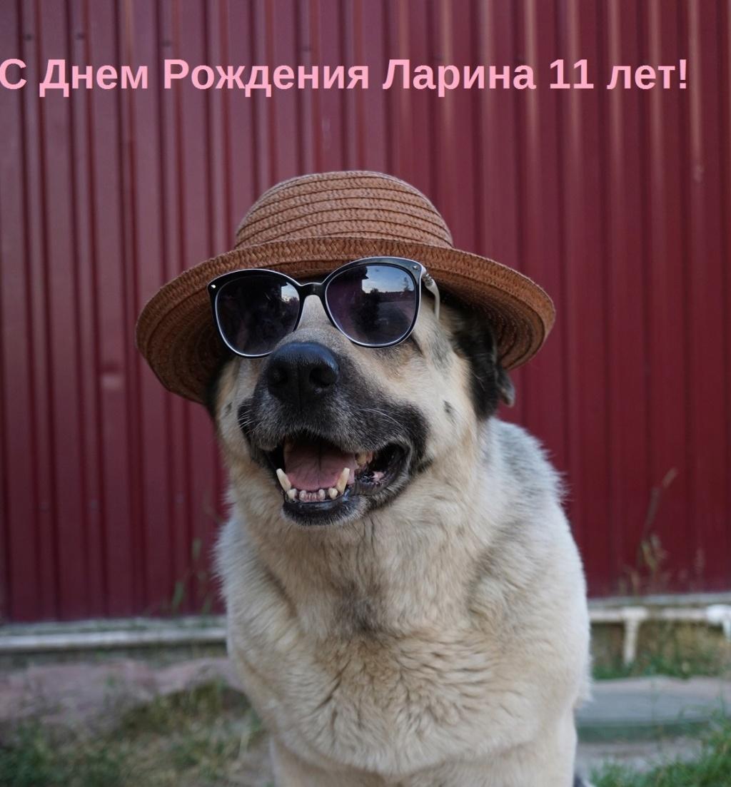 ВОСТОЧНО-ЕВРОПЕЙСКАЯ ОВЧАРКА АМАНАУЗ ЛАРИНА - Страница 9 Dsc02514