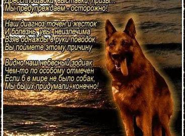 ДЕНЬ КИНОЛОГА! Getima15