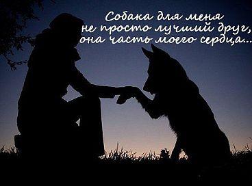 ДЕНЬ КИНОЛОГА! Getima16