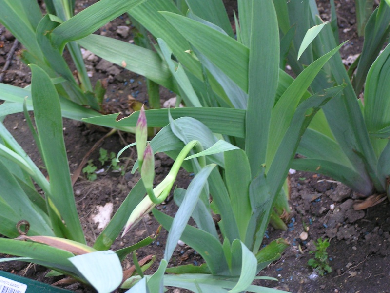 S.O.S. mes iris sont tout tordus P3100411