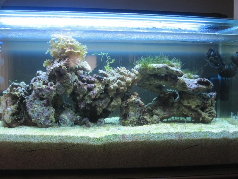 Aquarium  200 l - Page 4 Img_5410