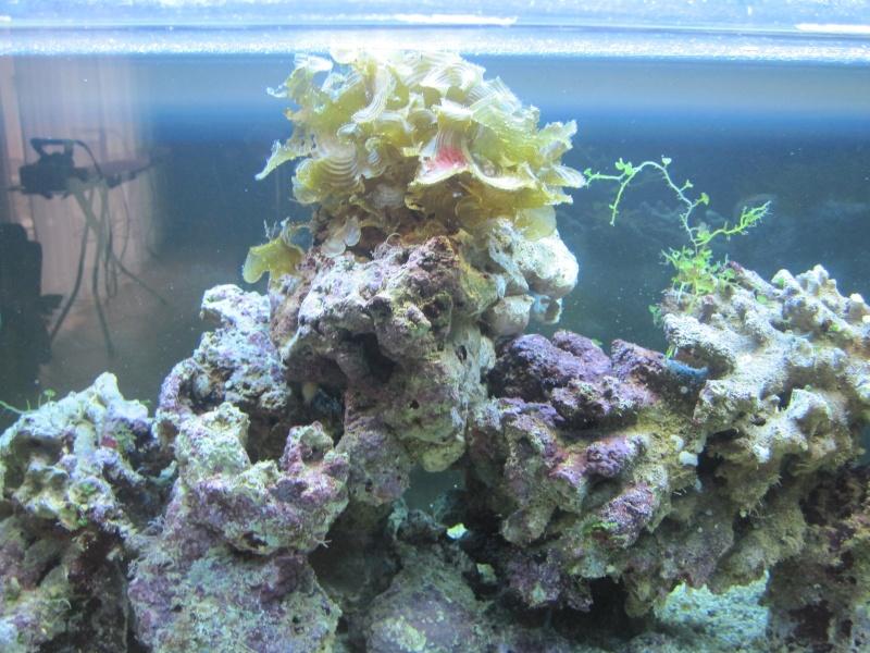 Aquarium  200 l - Page 4 Img_5411