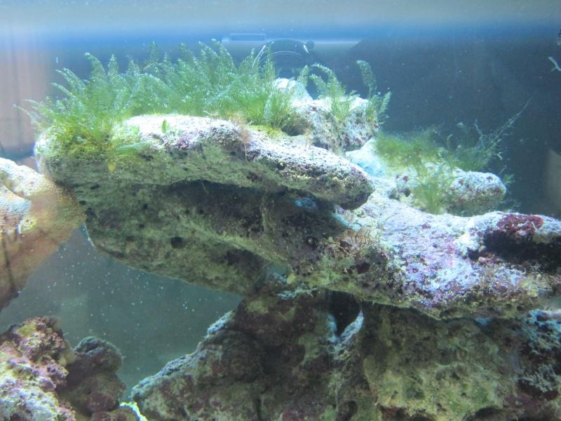 Aquarium  200 l - Page 4 Img_5412