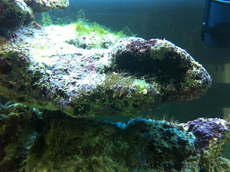 Aquarium  200 l - Page 4 Photo12
