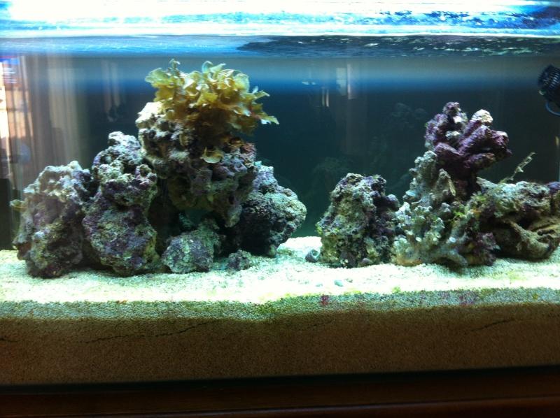 Aquarium  200 l - Page 5 Photo13