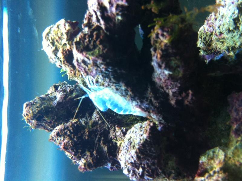 Aquarium  200 l - Page 5 Photo15