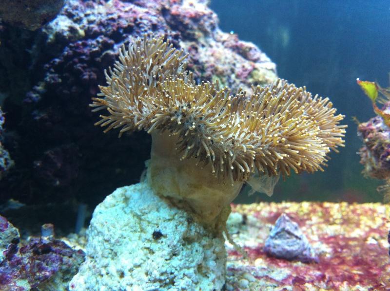 Aquarium  200 l - Page 5 Photo215