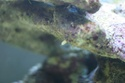 Aquarium  200 l - Page 4 Img_0510