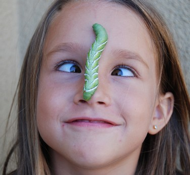 Don your armor...the hornworm battle begins! Girlan11