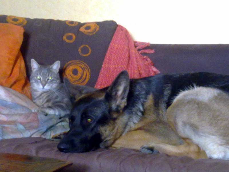 photos de vos chiens et de leurs copains de tous genres  07102010