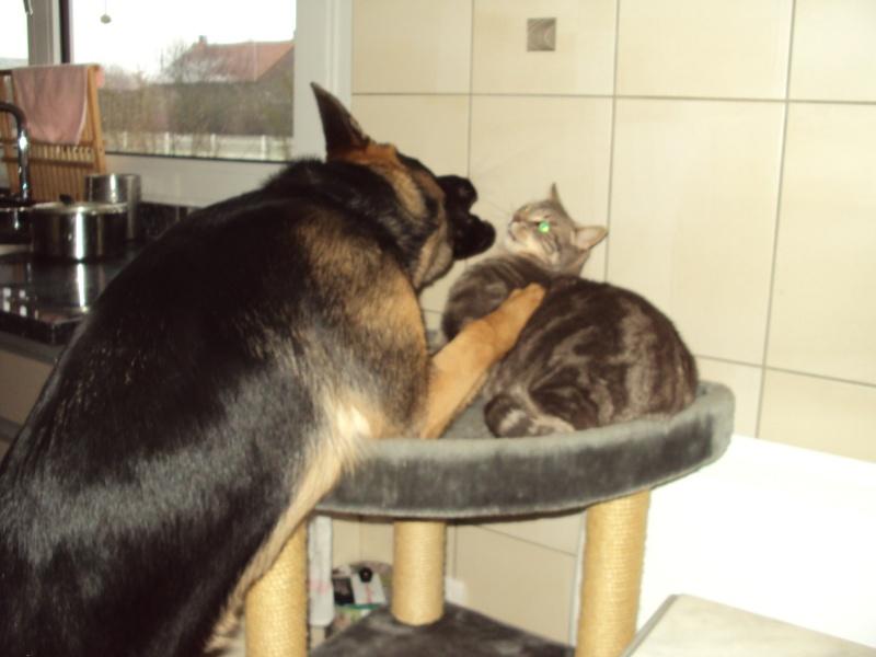 photos de vos chiens et de leurs copains de tous genres  Dsc00410