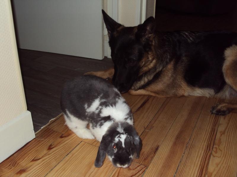 photos de vos chiens et de leurs copains de tous genres  Dsc01016
