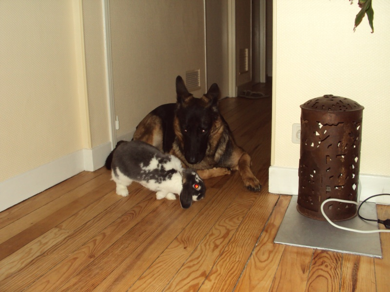 photos de vos chiens et de leurs copains de tous genres  Dsc01017