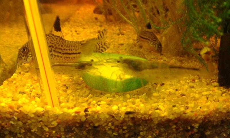 La nourriture de nos poissons 20130519