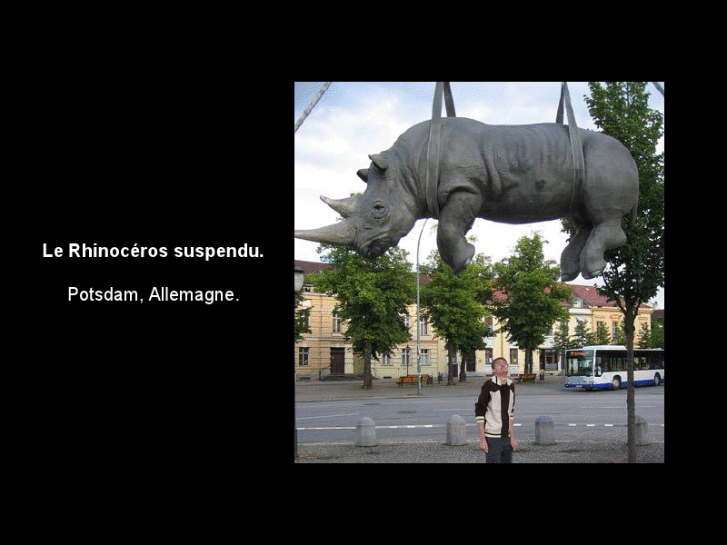 Animaux ... Rhinoc10