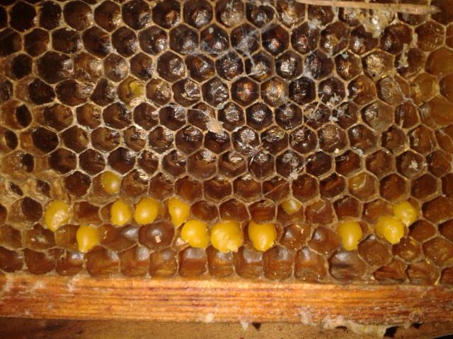 Résidu de pollen alors...  2013-013