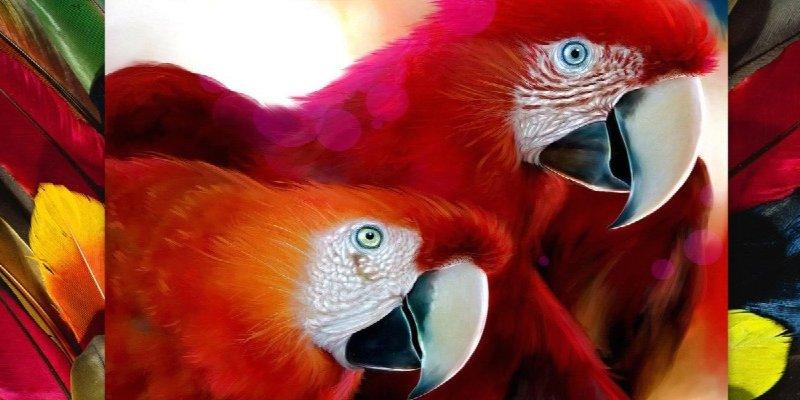 любимые попугаи