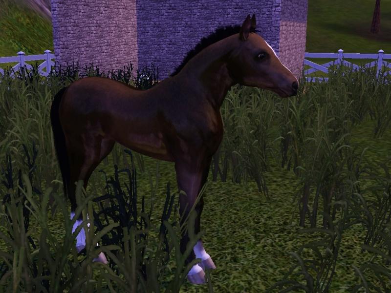 Surbrillance des chevaux dans le jeu. Screen12