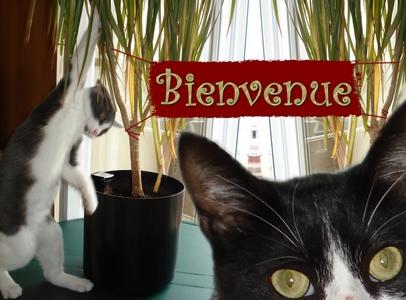 Méphi et sa Princesse Bienve10