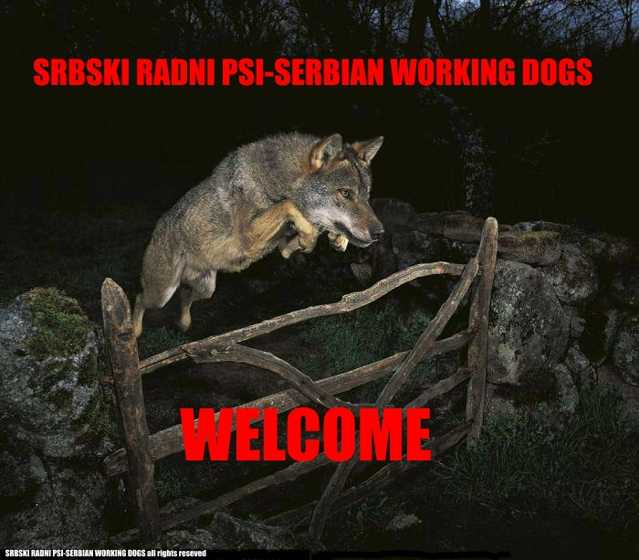 SRPSKI RADNI PSI-SERBIAN WORKING DOGS
