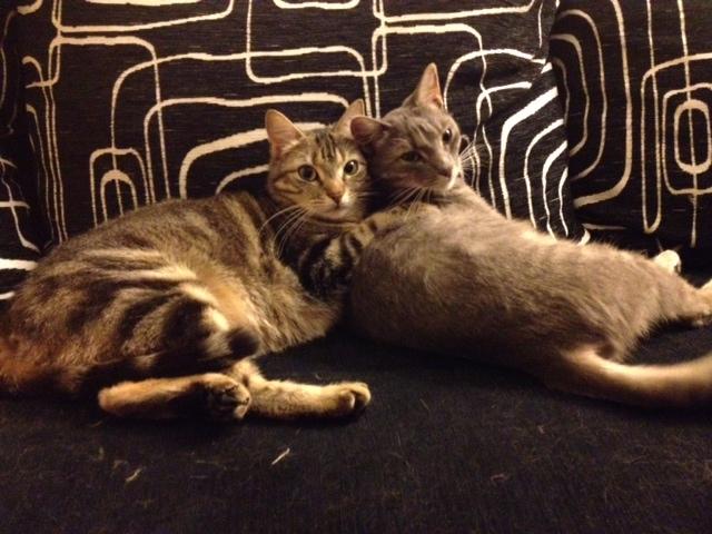 Pim et Rimel, deux adorables minettes en haute-vienne Photo13