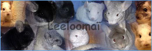 Vous citer comme association sur un forum d'informations sur les lapins et autres animaux? Montag14