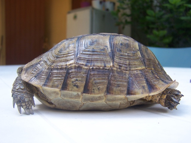 Besoin d'aide ! Tortue17