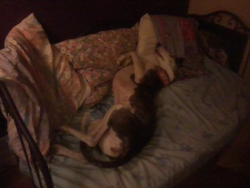 Posture originale pour dormir....et chez vous c'est comment??? - Page 5 20130414