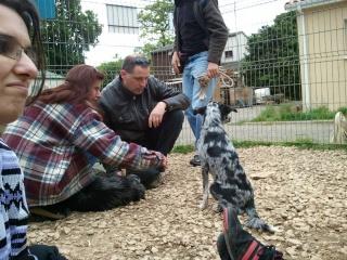 Photos des chiens d'Ecuras 19875112