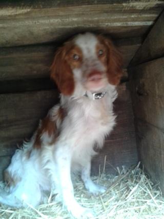 Photos des chiens d'Ecuras 20130520