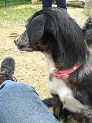 Photos des chiens d'Ecuras 20130521