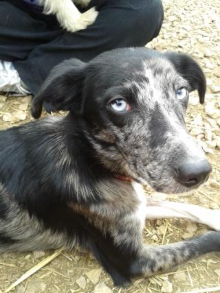 Photos des chiens d'Ecuras 20130522