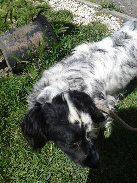 Photos des chiens d'Ecuras 20130611