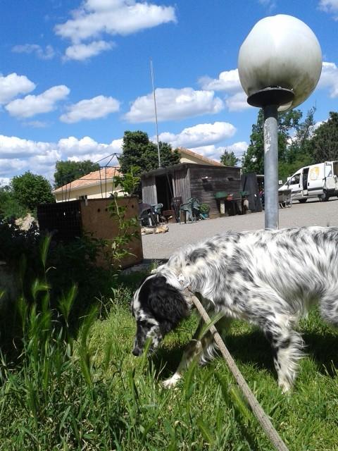 Photos des chiens d'Ecuras 20130612