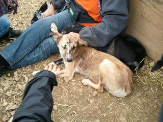 Photos des chiens d'Ecuras 40112612
