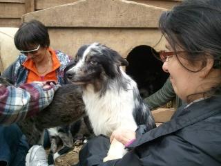 Photos des chiens d'Ecuras 42389414