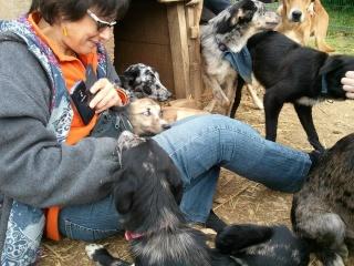 Photos des chiens d'Ecuras 48558111