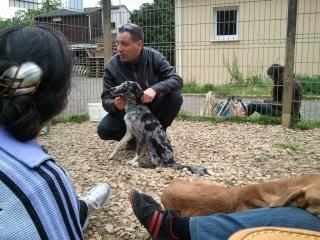 Photos des chiens d'Ecuras 57569710
