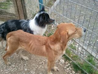 Photos des chiens d'Ecuras 92303811