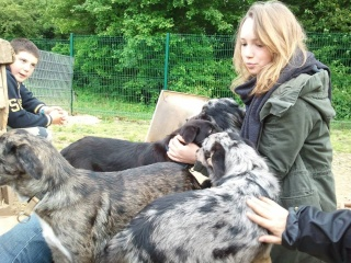 Photos des chiens d'Ecuras 93536810
