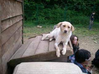 Photos des chiens d'Ecuras 94152710