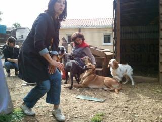 Photos des chiens d'Ecuras 94235410