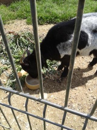 Photos des chiens d'Ecuras Eglant13