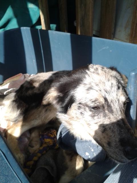 Photos des chiens d'Ecuras Jo10