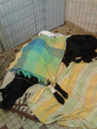 Photos des chiens d'Ecuras La_mam16