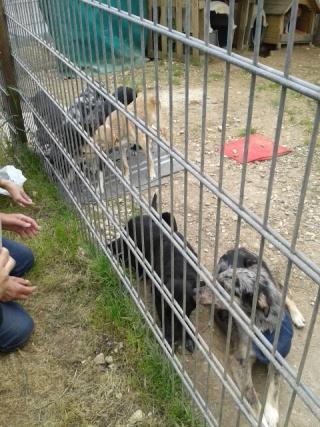 Photos des chiens d'Ecuras Les_ba17