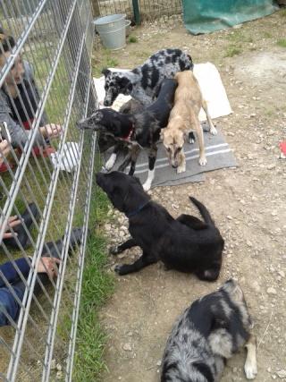 Photos des chiens d'Ecuras Les_ba18