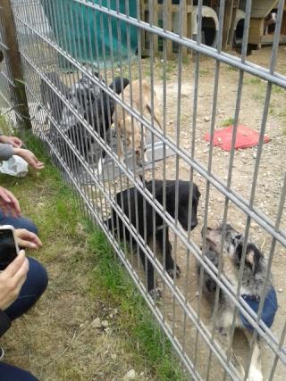 Photos des chiens d'Ecuras Les_ba19