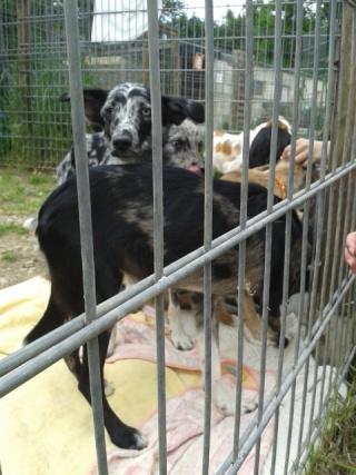 Photos des chiens d'Ecuras Les_ba20