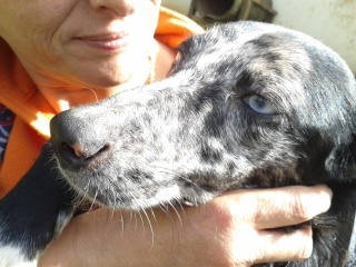 Photos des chiens d'Ecuras Les_be10